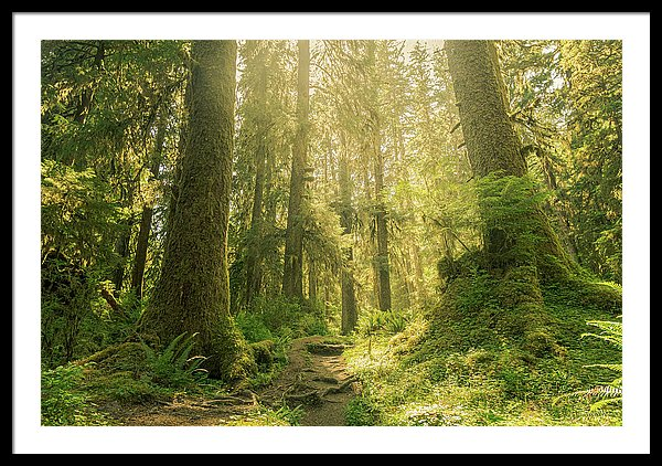 Hoh Rainforest, Olympic National Park, Washinton - Framed Print