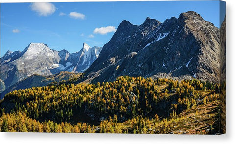 Jumbo Pass And Golden Larch, Purcell Mountains, British Columbia - Canvas Print