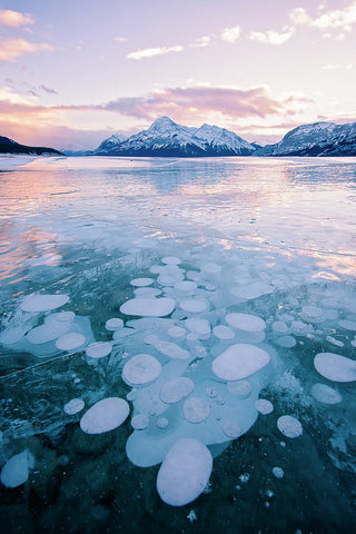Methane Bubbles Frozen In Abraham Lake, Clearwater County, Alberta - Art Print