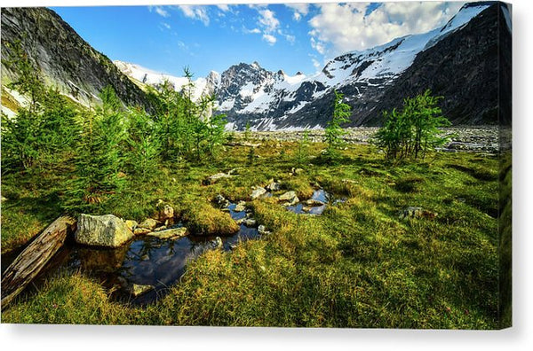 Mountain Meadow, Lake of the Hanging Glacier, British Columbia - Canvas Print