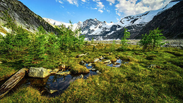 Mountain Meadow, Lake of the Hanging Glacier, British Columbia - Art Print