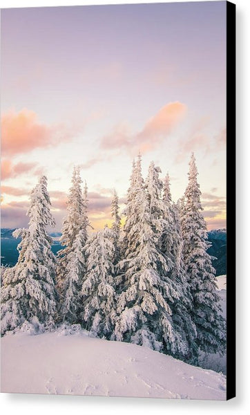 Snow Covered Trees At Sunset In Winter - Canvas Print