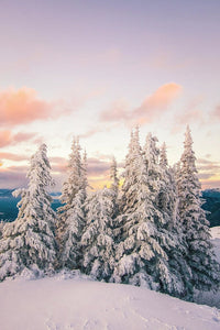 Snow Covered Trees At Sunset In Winter - Art Print