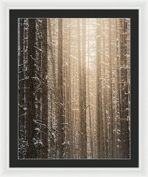 Sun In A Winter Forest - Framed Print