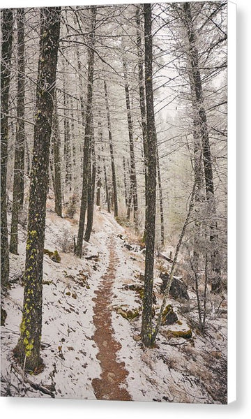 Winter Wilderness - Canvas Print
