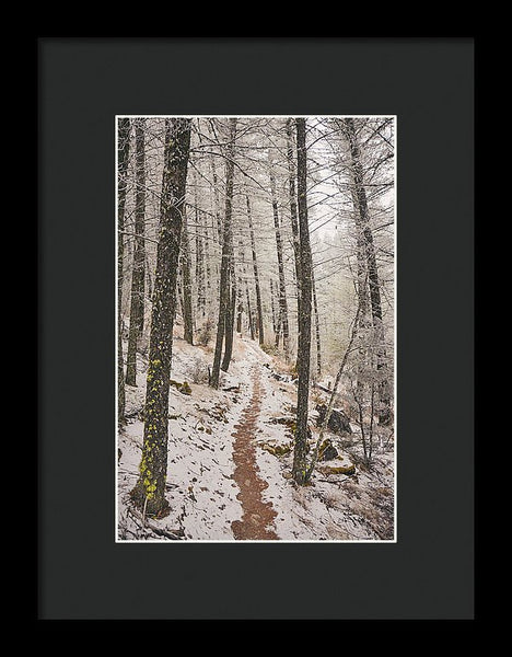 Winter Wilderness - Framed Print