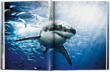 Load image into Gallery viewer, Michael Muller. Sharks. Face-to-Face with the Ocean's Endangered Predator / Neighborhood Goods