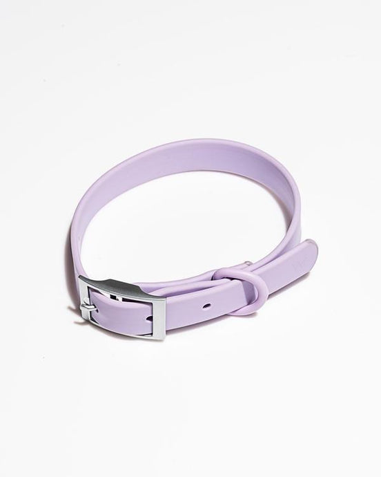 Wild One Medium Collar / Neighborhood Goods