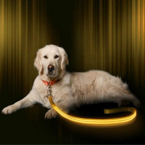 LED Night Light Dog Leash (Pet Safety)