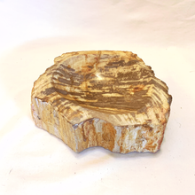 Petrified Wood Stone Dish