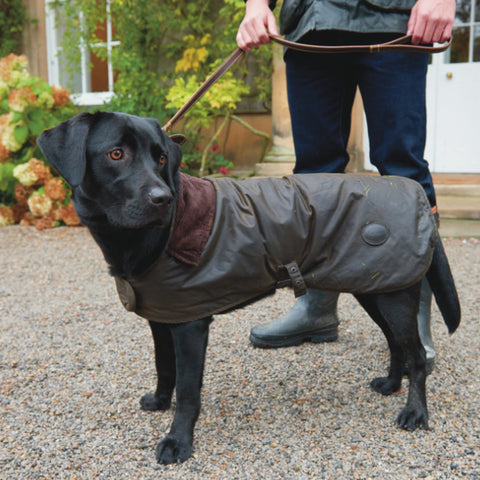 dog in dog coat