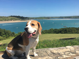 Padstow Rock dog boutique
