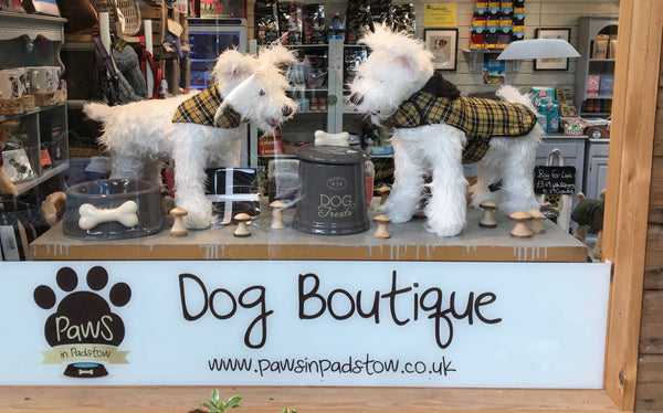 Paws in Padstow dog boutique pet shop window display