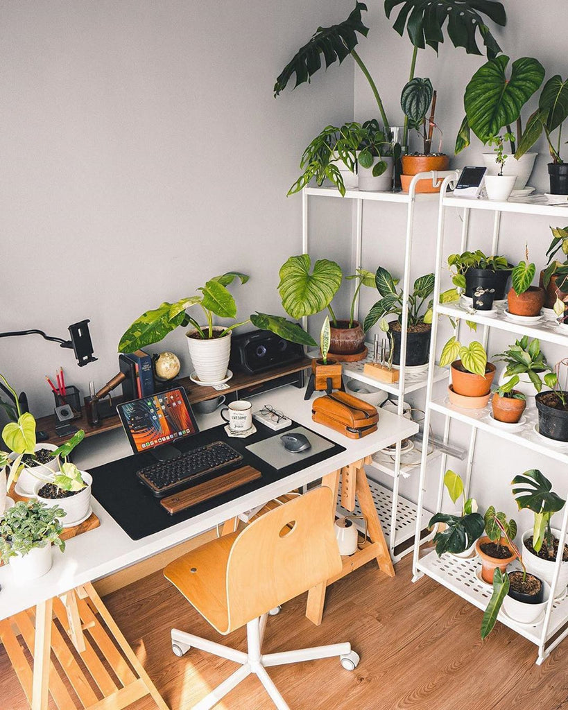 Benefits of Adding Plants To Your Office