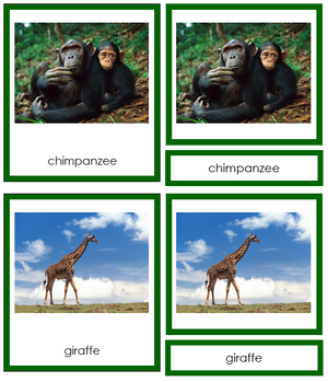 African Animals (color-coded) - Montessori Print Shop