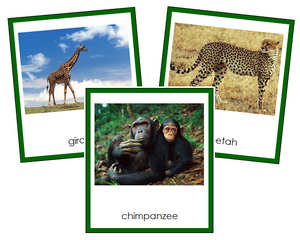 African Animals - Montessori geography cards
