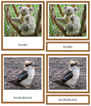 Australian/Oceanian Animals (color-coded) - Montessori Print Shop