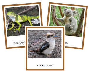 Australian/Oceanian Animals - Montessori geography cards