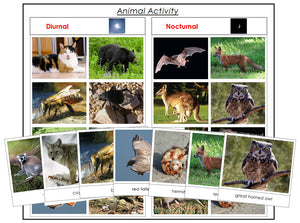 Animal Activity: Nocturnal or Diurnal - Montessori Print Shop zoology materials