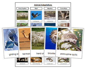 Animal Adaptations Sorting - Montessori Print Shop
