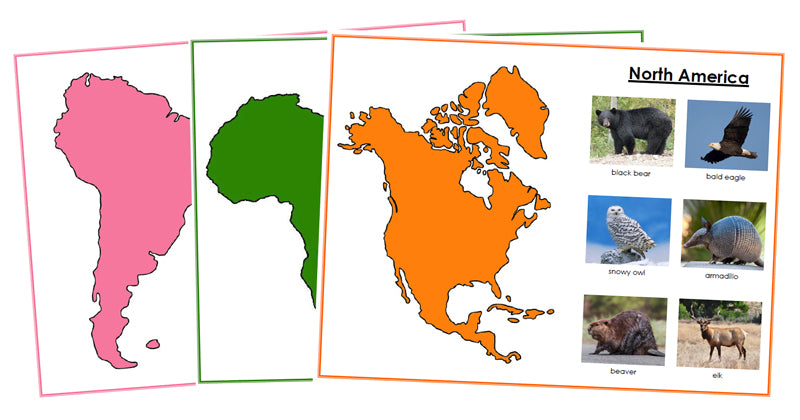 Animals of the Continents Set 2 (color-coded) - Montessori Print Shop