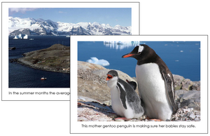 Antarctica Geography Cards - Montessori Print Shop