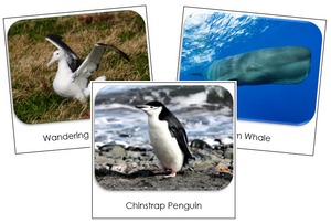 Antarctica Safari Toob Cards - Montessori Print Shop