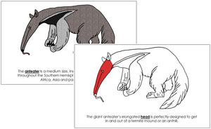 Anteater Nomenclature Book (red) - Montessori Print Shop