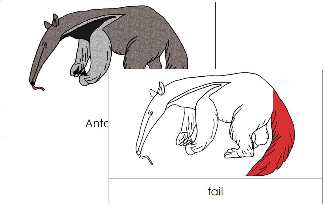 Anteater Nomenclature Cards (red) - Montessori Print Shop