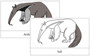 Anteater Nomenclature Cards - Montessori Print Shop