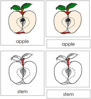 Apple Nomenclature3-Part Cards (red) - Montessori Print Shop