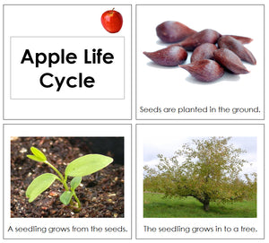 Apple Life Cycle Book - Toddler - Montessori Print Shop