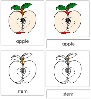 Apple Nomenclature Cards - Montessori Print Shop