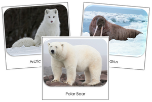 Arctic Safari Toob Cards - Montessori Print Shop