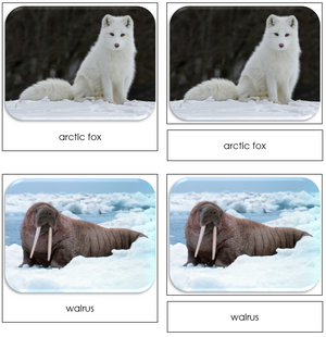Arctic - Safari Toob Cards