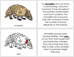 Armadillo Nomenclature Book (red) - Montessori Print Shop
