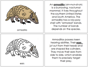 Armadillo Nomenclature Book - Montessori Print Shop