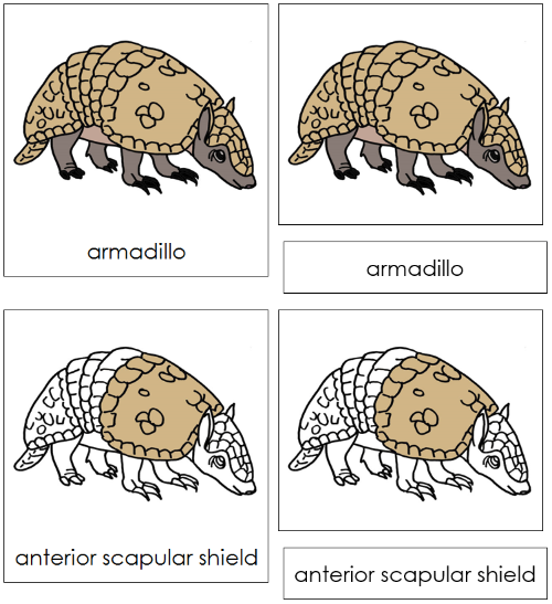 Armadillo Nomenclature Cards - Montessori