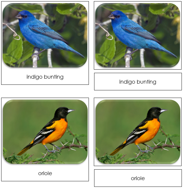 Backyard Birds - Safari Toob Cards