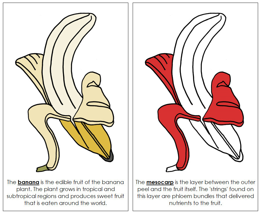 Banana Nomenclature Book (red) - Montessori Print Shop