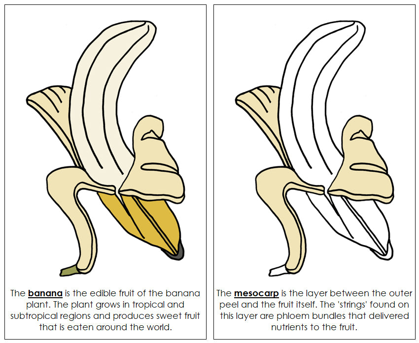Banana Nomenclature Book - Montessori Print Shop