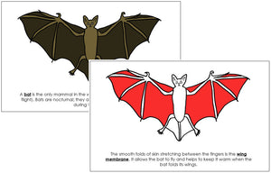 Bat Nomenclature Book (red) - Montessori Print Shop