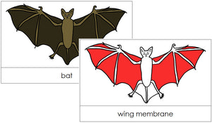 Bat Nomenclature Cards (red) - Montessori Print Shop