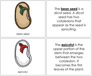 Bean Seed Nomenclature Book (red) - Montessori Print Shop