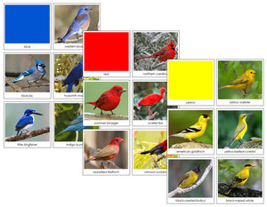 Bird Color Sorting Cards