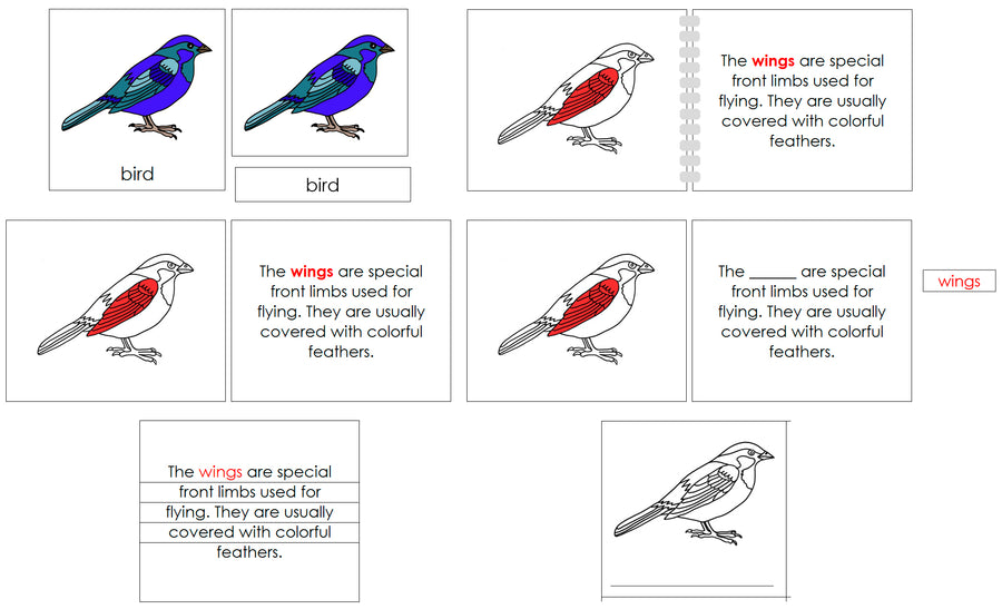 Bird Definition Set - Montessori Print Shop nomenclature