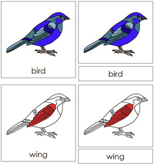 Bird Nomenclature 3-Part Cards (red) - Montessori Print Shop