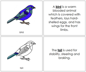 Bird Nomenclature Book - Montessori Print Shop