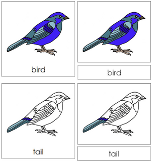 Bird Nomenclature Cards - Montessori
