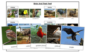 Animal Adaptation: Birds & Their Feet - Montessori Print Shop